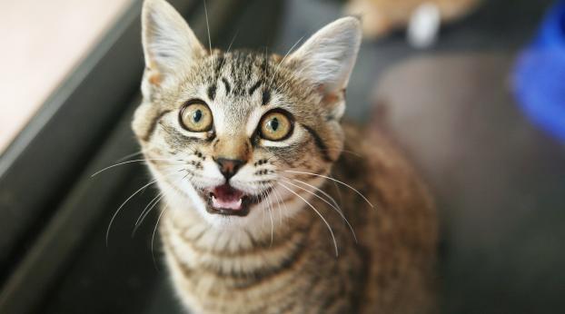 Haben Katzen eigentlich ein gutes Gedächtnis?