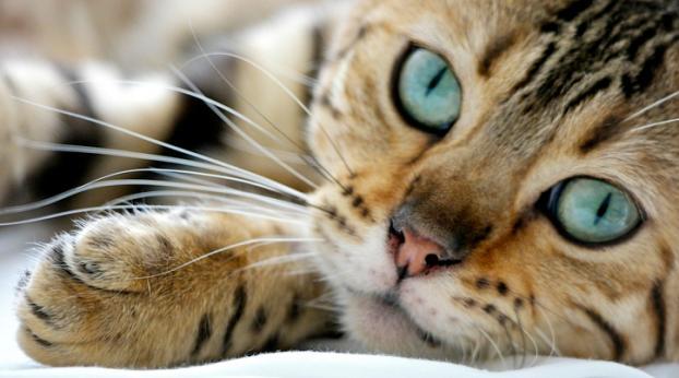 Wenn Du diese Symptome an den Pfoten deiner Katze siehst, solltest Du schnell reagieren...