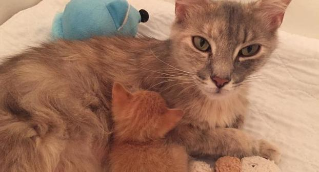 Diese trauernde Katzenmama fand durch eine Adoption ins Leben zurück