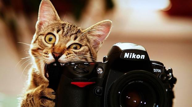 7 Tipps für schönere Katzenfotos