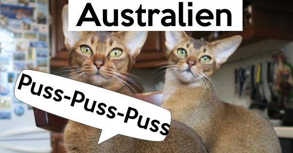 So werden Katzen in anderen Ländern gerufen