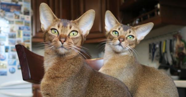Kater vs. Katzen: sind die Unterschiede wirklich so groß?
