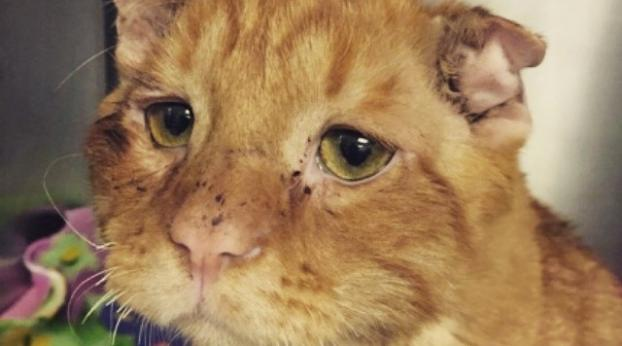 Ein Paar adoptiert eine traurige und hoffnungslose Katze, eine Stunde später geschah etwas Wunder...