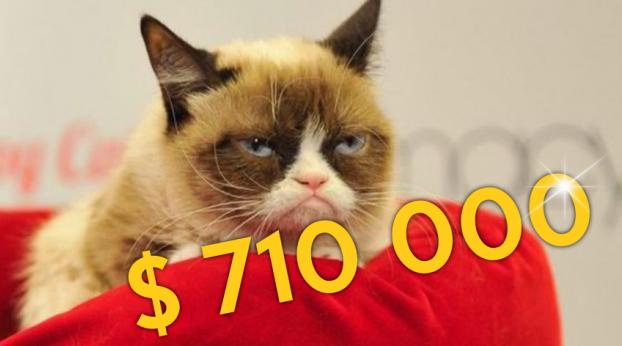 Darum hat ein Gericht Grumpy Cat gerade ein Vermögen zugesprochen