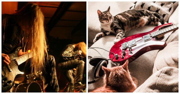 SCHNURRRRRRRR!!! Heavy Metal Bands helfen mit Sampler Katzen in Not