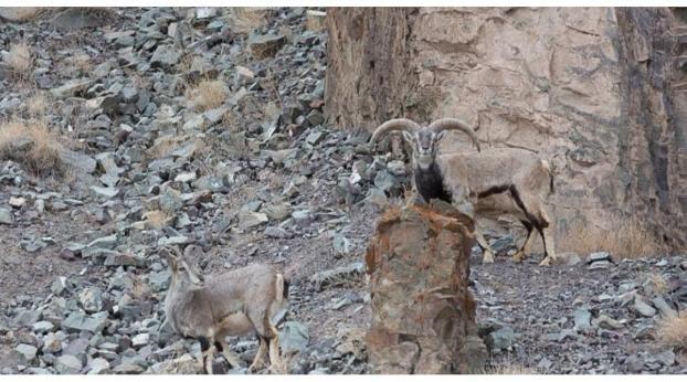 Auf diesem Bild versteckt sich ein Leopard. Könnt ihr ihn finden?