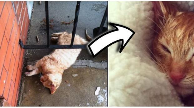 Er fand eine halb erfrorene Katze vor seiner Haustür und rettete ihr das Leben