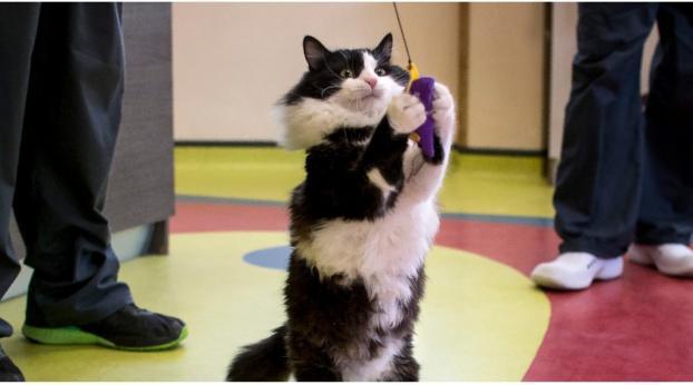 Dürfen wir vorstellen: Die erste bionische Katze der Welt