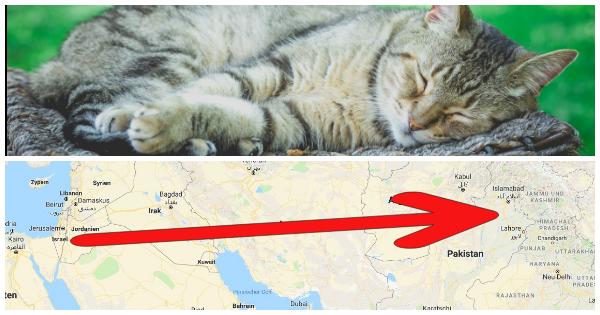 Sie setzte Himmel und Hölle in Bewegung, damit ihre Katze die Grenze überqueren konnte