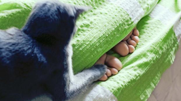 HILFE! Meine Katze attackiert nachts meine Füße!