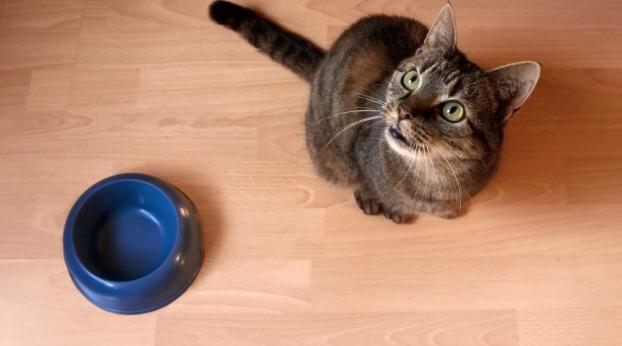 Darum hat Deine Katze IMMER Hunger