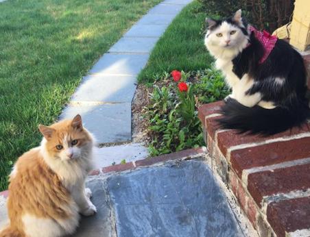 Die bittersüße Liebesgeschichte zweier Katzen