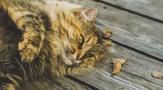 5 gute Gründe, eine Seniorkatze zu adoptieren
