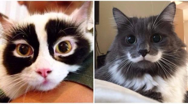 Katzen mit verrückten und einzigartigen Fellzeichnungen