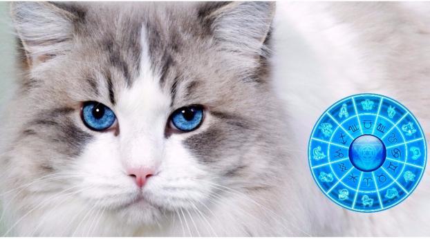 Welches Sternzeichen entspricht dem Charakter deiner Katze?