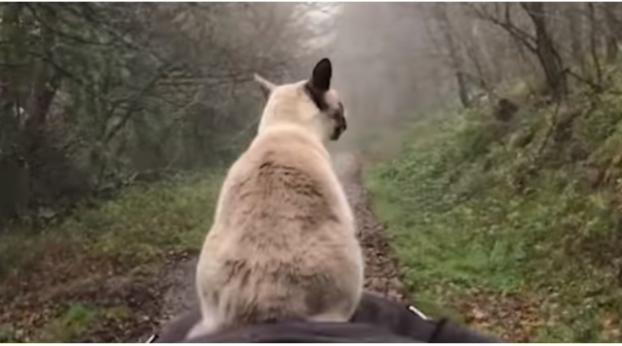 Diese Katze hat eine außergewöhnliche Art zu reisen