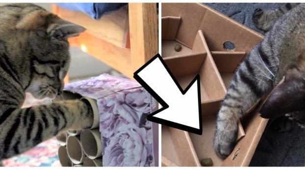4 stimulierende Katzenspielzeuge, die Du super leicht selber basteln kannst