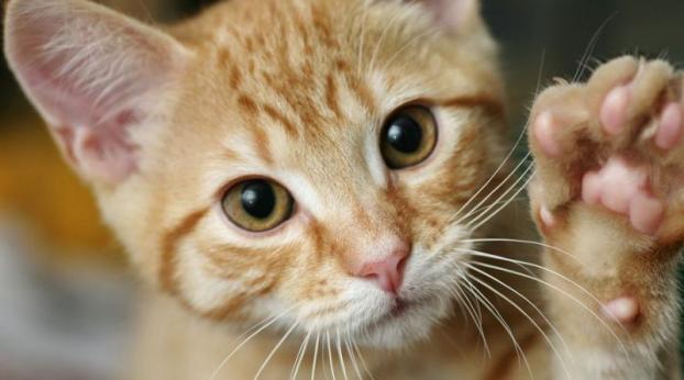 Ist meine Katze LINKS-oder RECHTSPFOTIG?