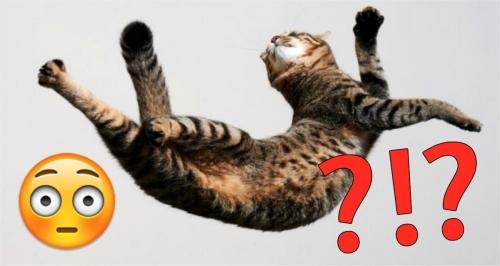 Katzen landen IMMER auf ihren Pfoten. Aber WIE geht das?