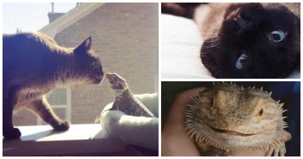 Diese Katze liebt einen kleinen Drachen