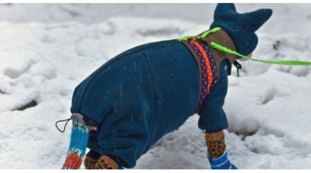 FOTOS: Dieses Kätzchen ist bereit für den Winter
