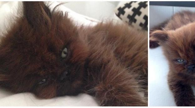 Die unfassbare Verwandlung einer adoptierten Katze