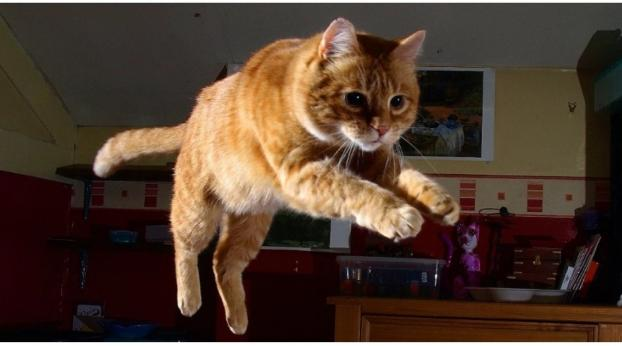 Hilfe, meine Katze spielt nachts total verrückt!
