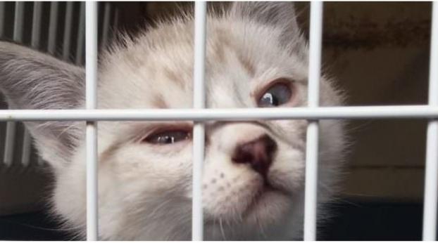 Seht nur, was diese Katze machte, als alle Katzen im Tierheim adoptiert wurden, bis auf sie...
