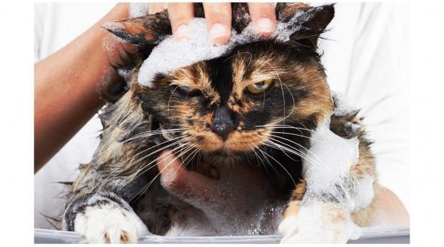 Die Katze baden: Schlechte Idee oder Notwendigkeit?