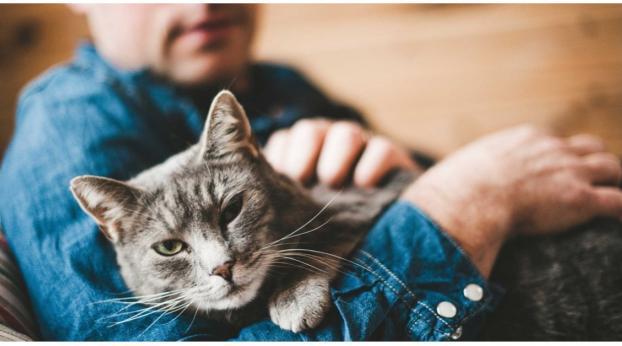 Wenn du deine Katze so trägst, könnte ihr das sehr weh tun...