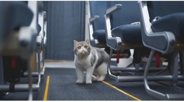 Sie verlor ihre Katze am Flughafen und stellte alles auf den Kopf, um sie wiederzufinden