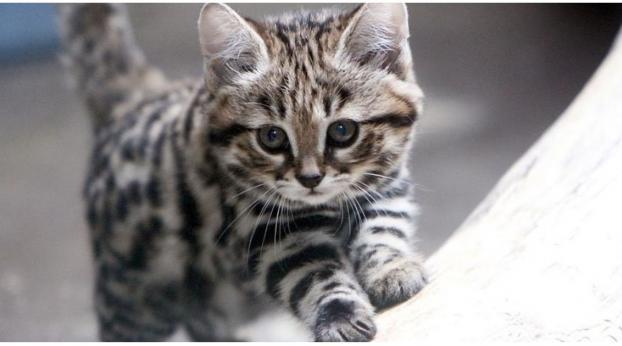 Die TÖDLICHSTE Katze der Welt ist gleichzeitig auch die süßeste