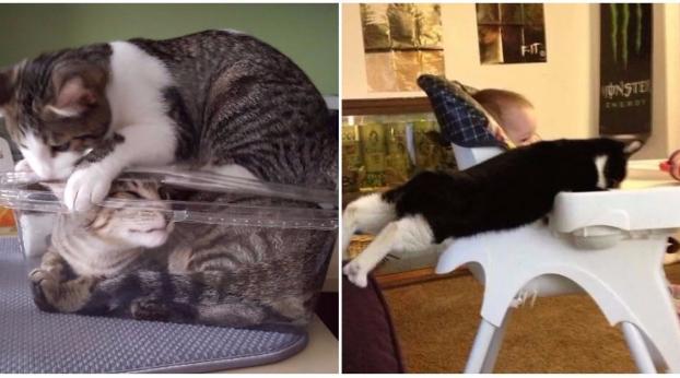 [FOTOS] Das passiert, wenn man seine Haustiere für ein paar Minuten aus den Augen lässt