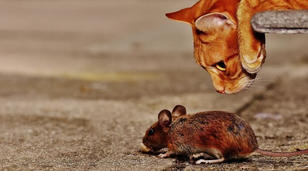 Kätzchen, warum bringst Du mir immer deine Beute?